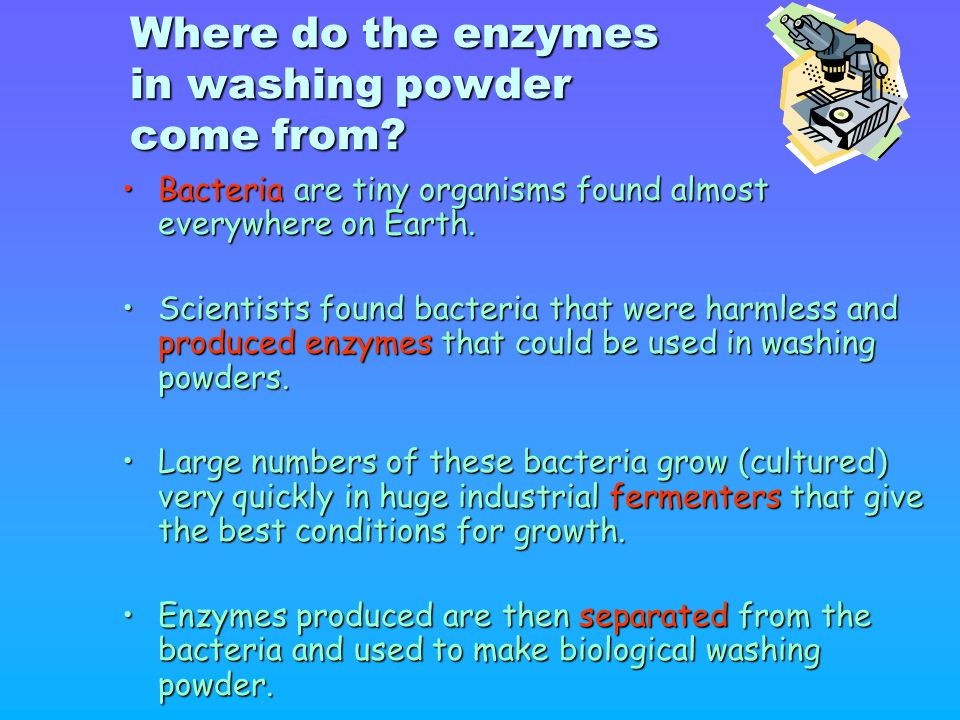 Where do the enzymes in washing powder come from