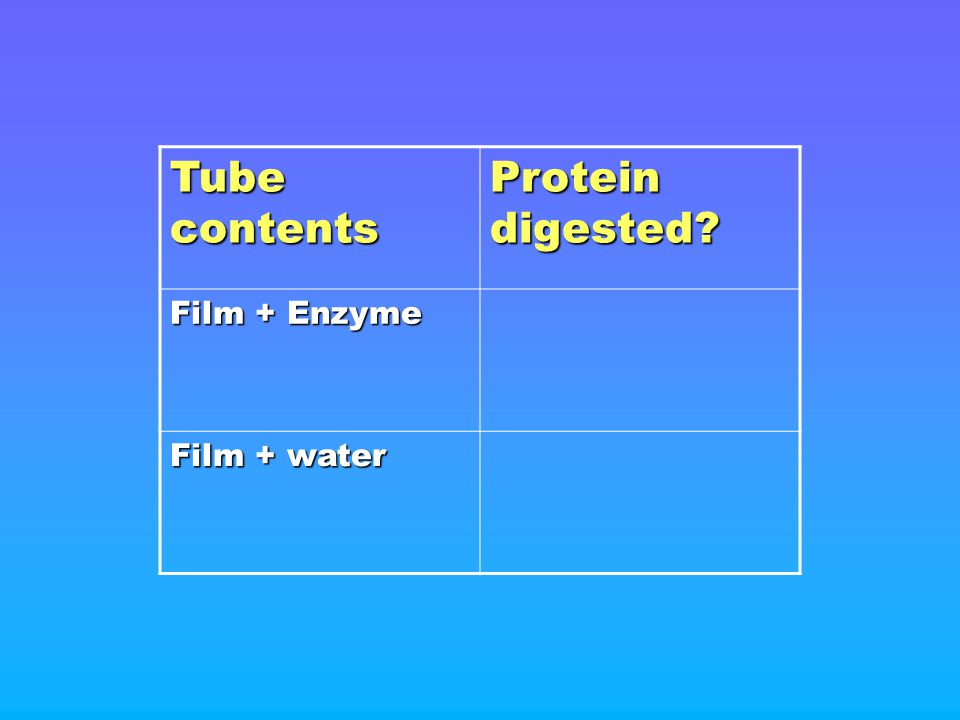 Tube contents Protein digested Film + Enzyme Film + water