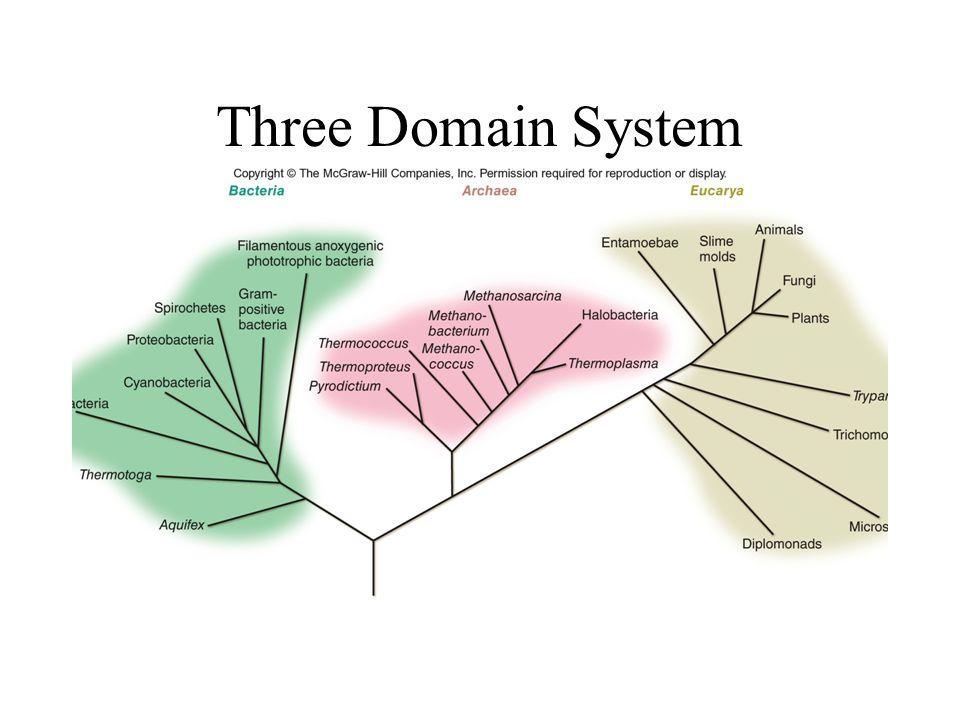 Three Domain System