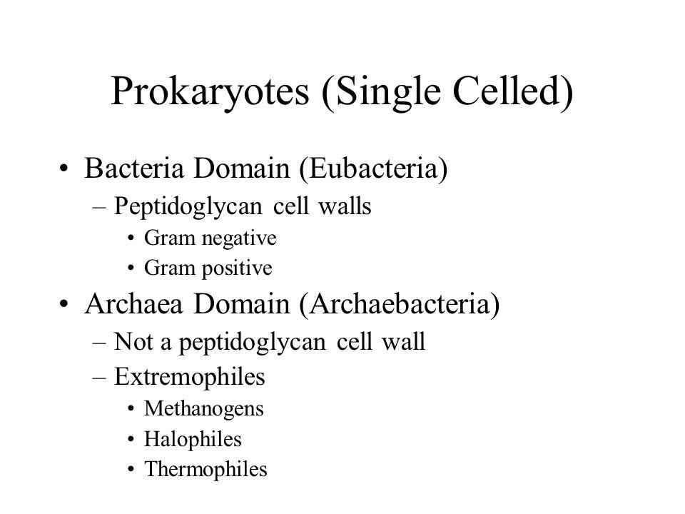 Prokaryotes (Single Celled)