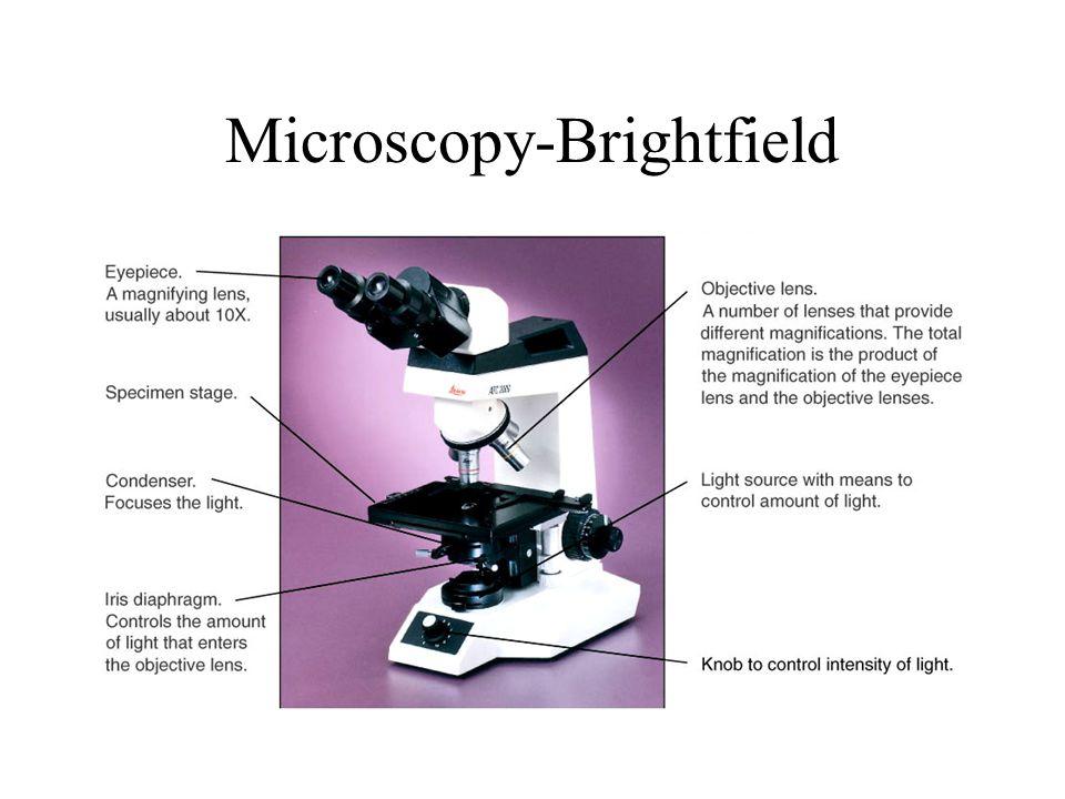 Microscopy-Brightfield