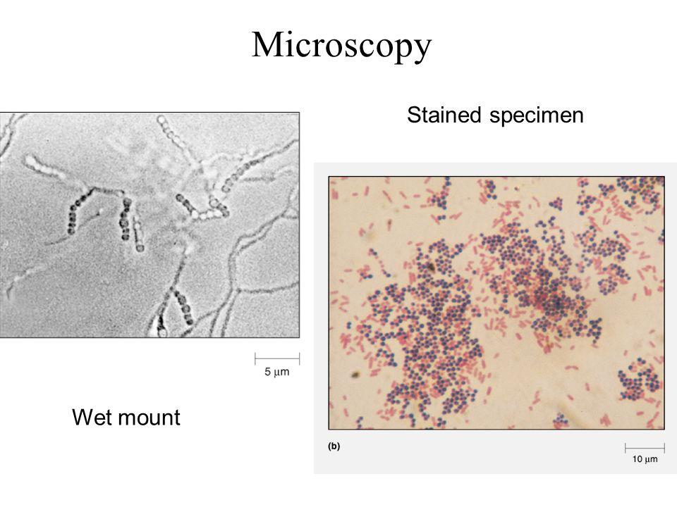 Microscopy Stained specimen Wet mount
