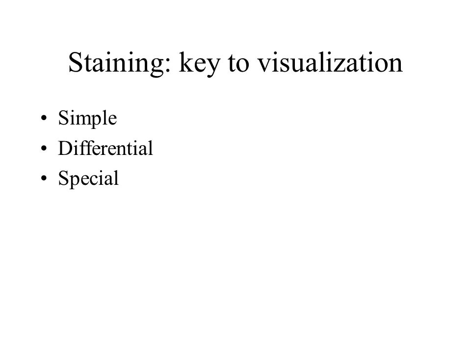 Staining: key to visualization