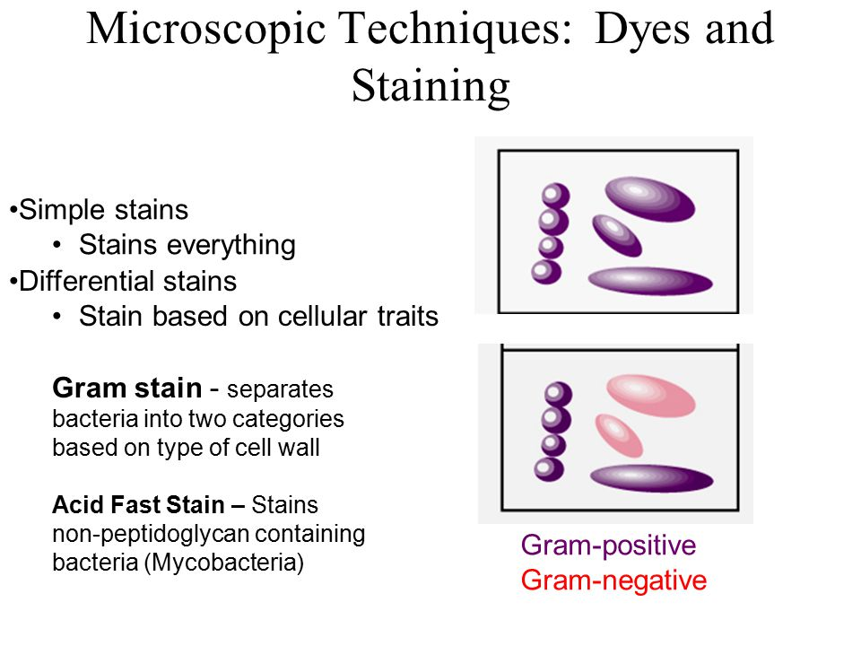 Microscopic Techniques: Dyes and Staining