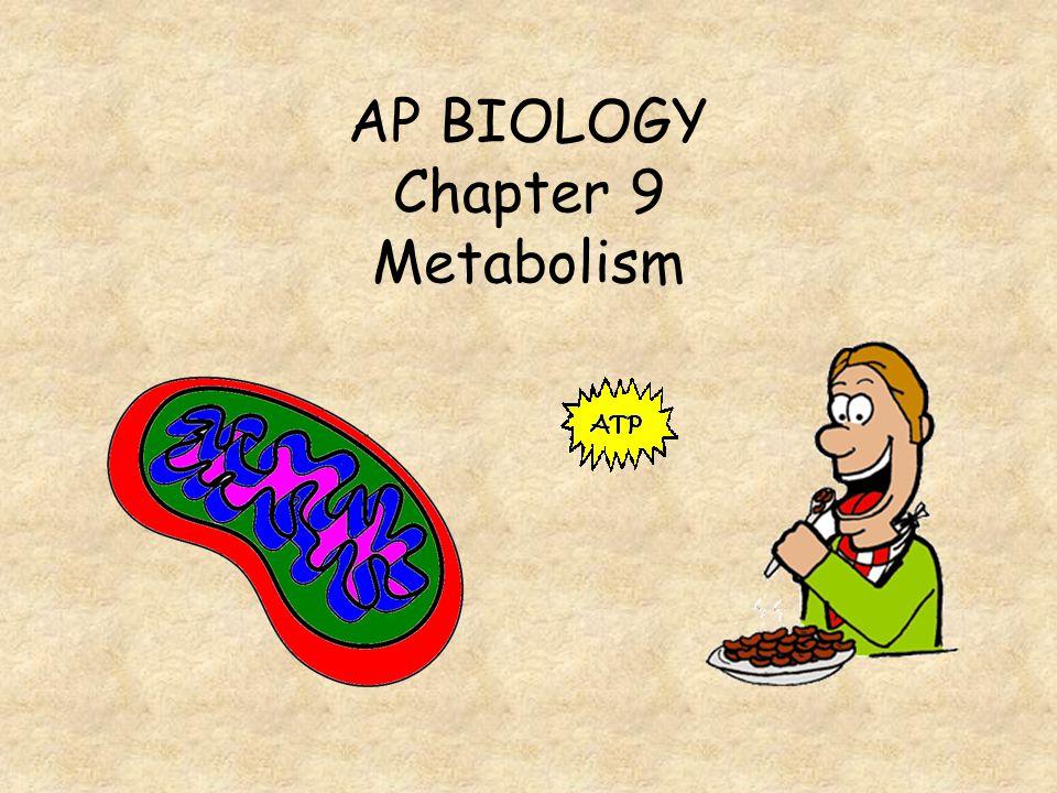 AP BIOLOGY Chapter 9 Metabolism