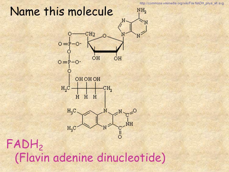 FADH2 (Flavin adenine dinucleotide)