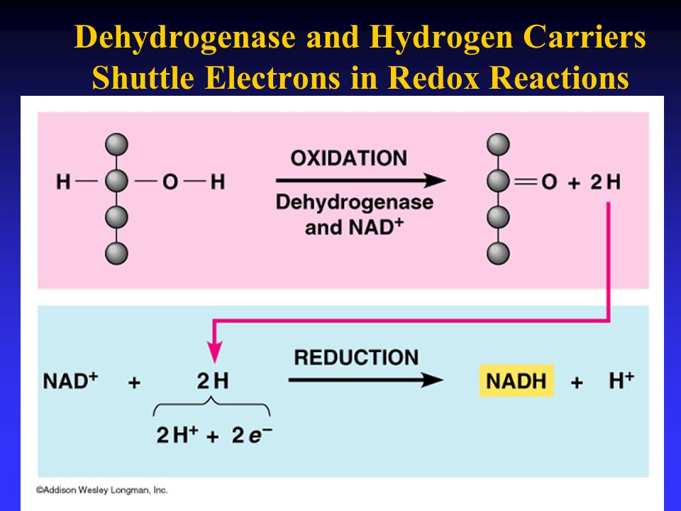 Dehydrogenase and Hydrogen Carriers Shuttle Electrons in Redox Reactions