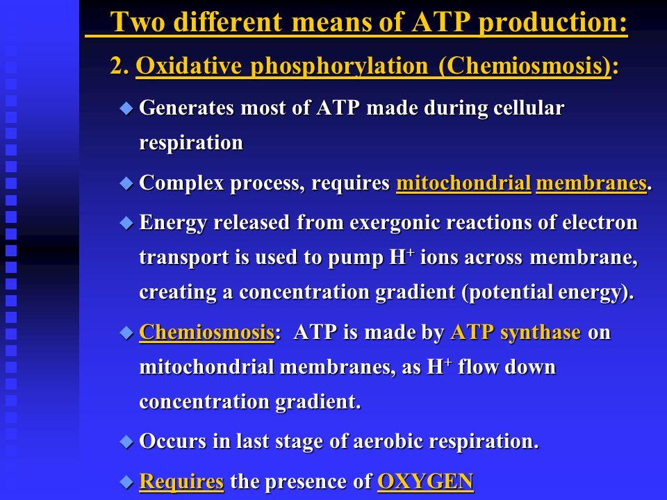2. Oxidative phosphorylation (Chemiosmosis):