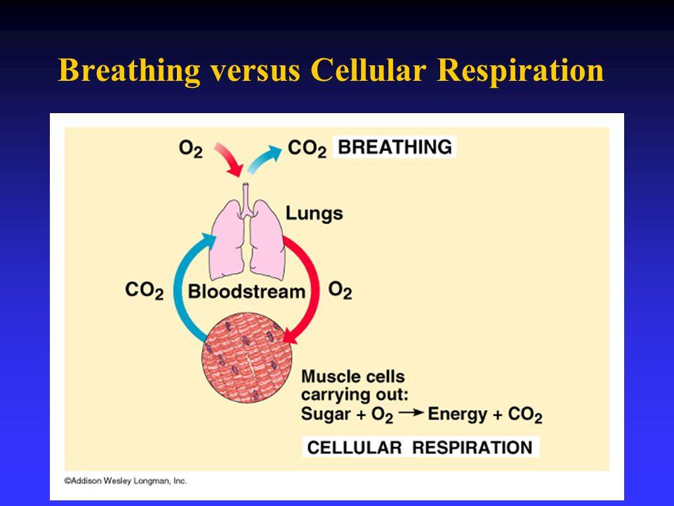Breathing versus Cellular Respiration