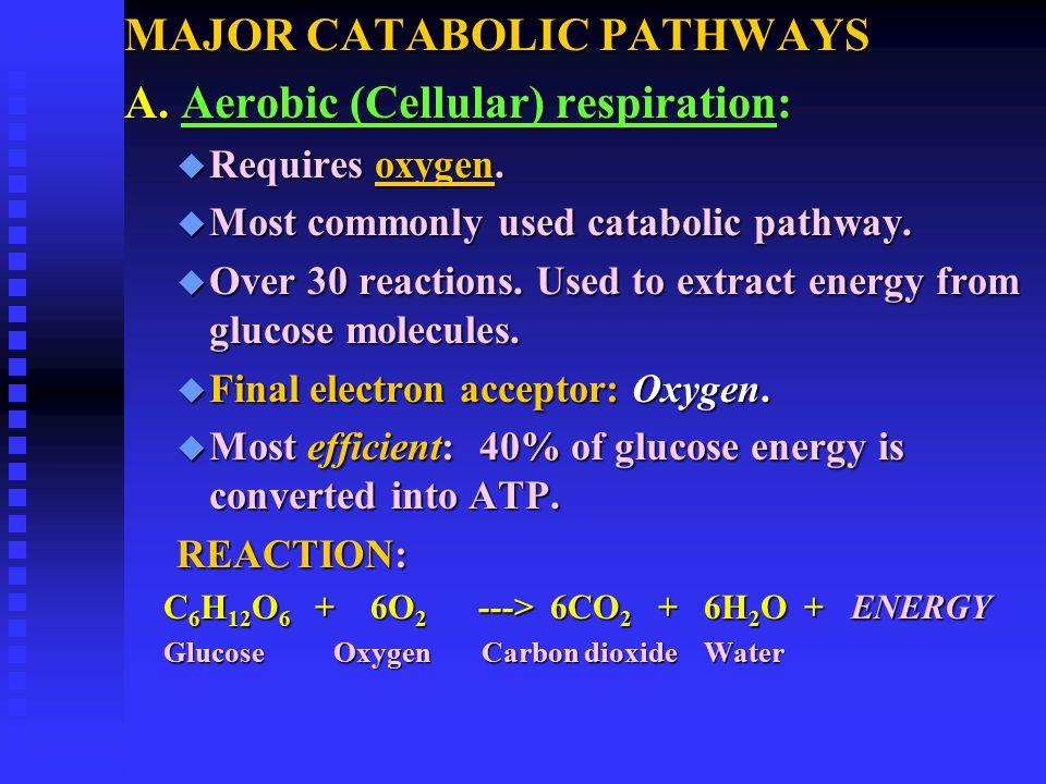 MAJOR CATABOLIC PATHWAYS A. Aerobic (Cellular) respiration: