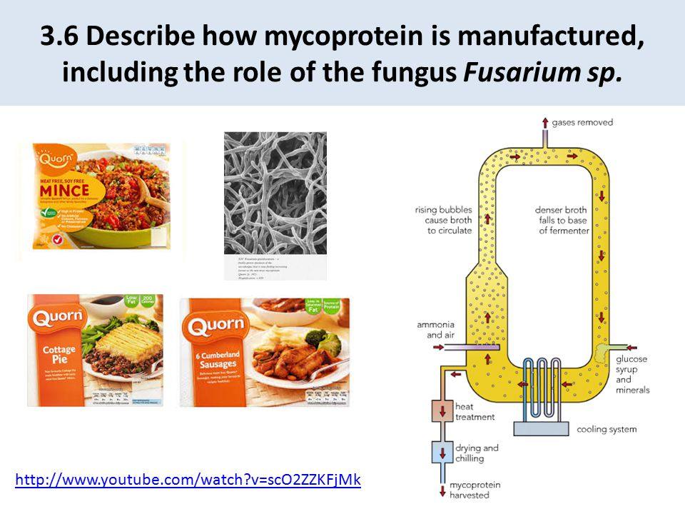 3.6 Describe how mycoprotein is manufactured, including the role of the fungus Fusarium sp.