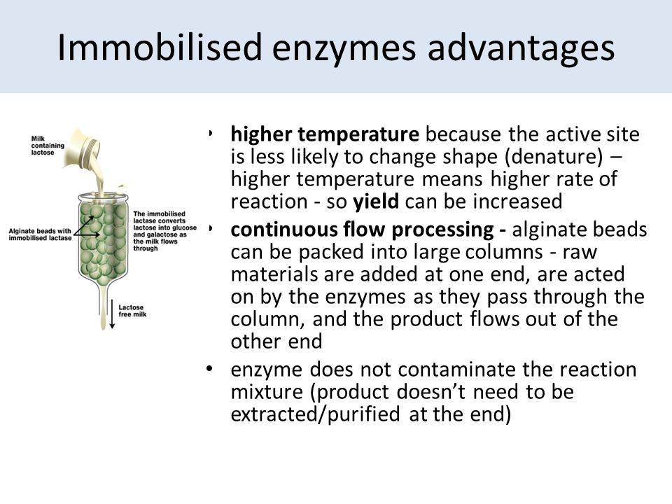Immobilised enzymes advantages