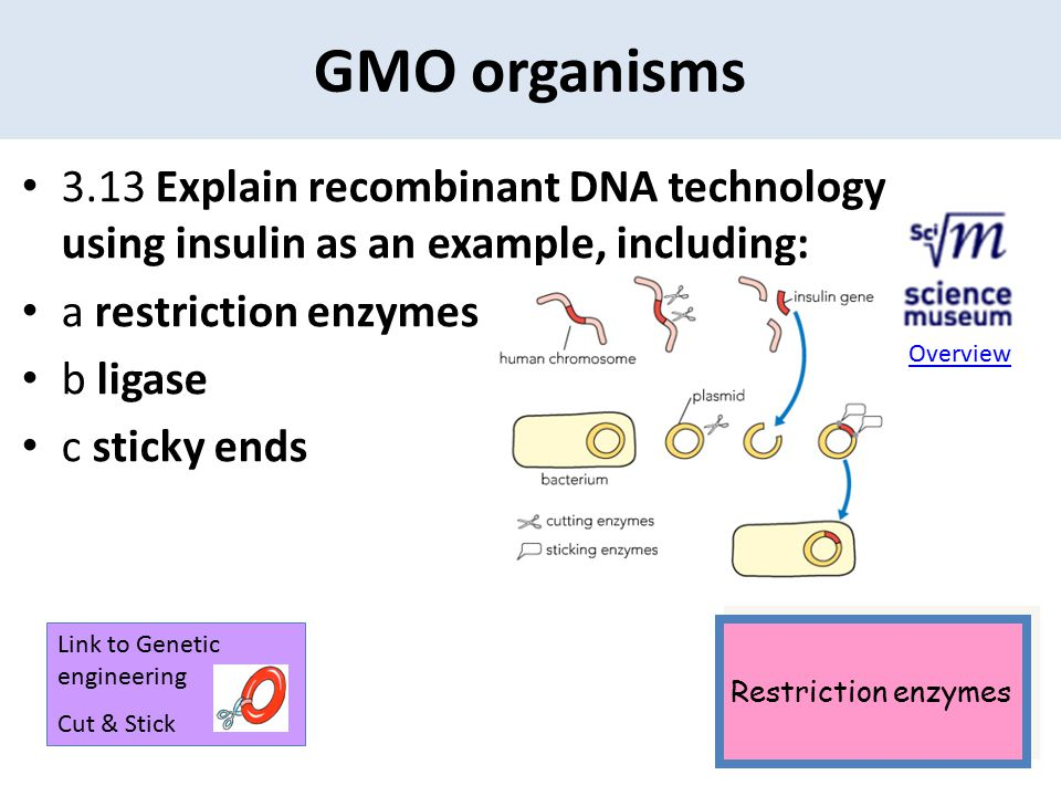 GMO organisms 3.13 Explain recombinant DNA technology using insulin as an example, including: a restriction enzymes.