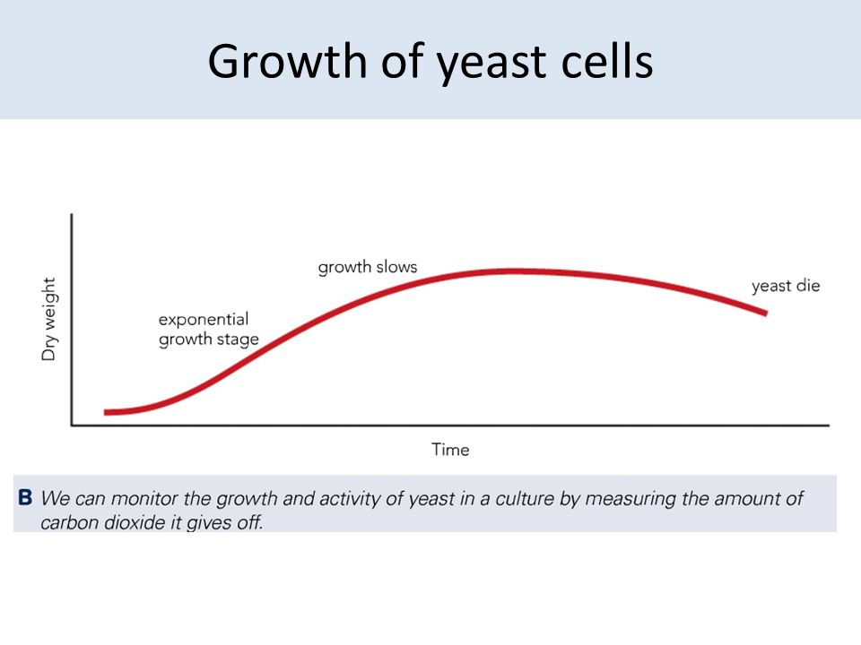 Growth of yeast cells