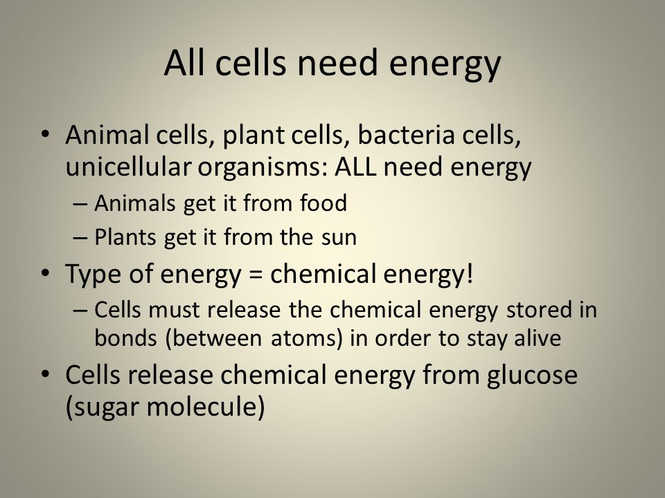 All cells need energy Animal cells, plant cells, bacteria cells, unicellular organisms: ALL need energy.