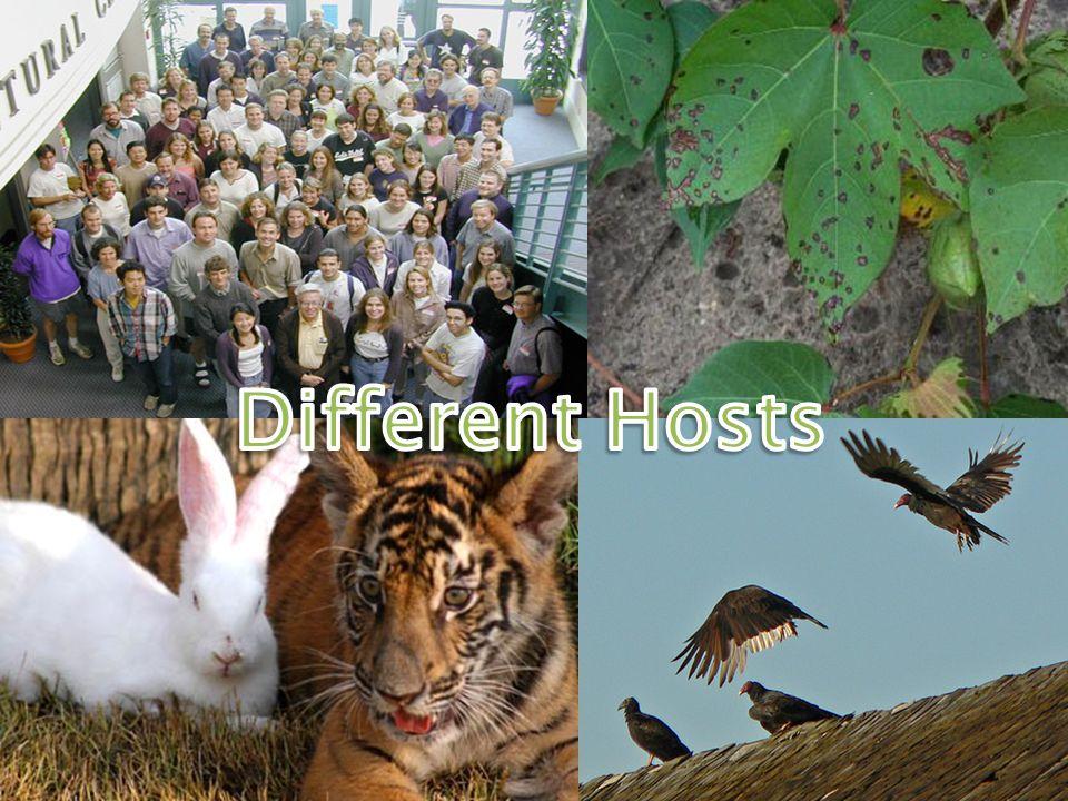 Different Hosts