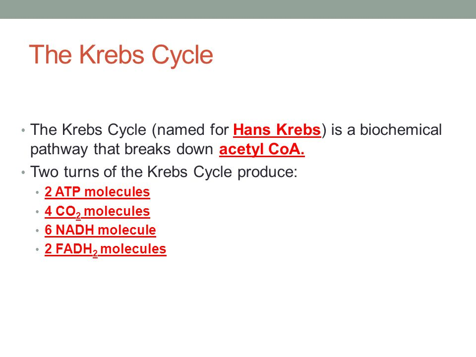 The Krebs Cycle The Krebs Cycle (named for Hans Krebs) is a biochemical pathway that breaks down acetyl CoA.