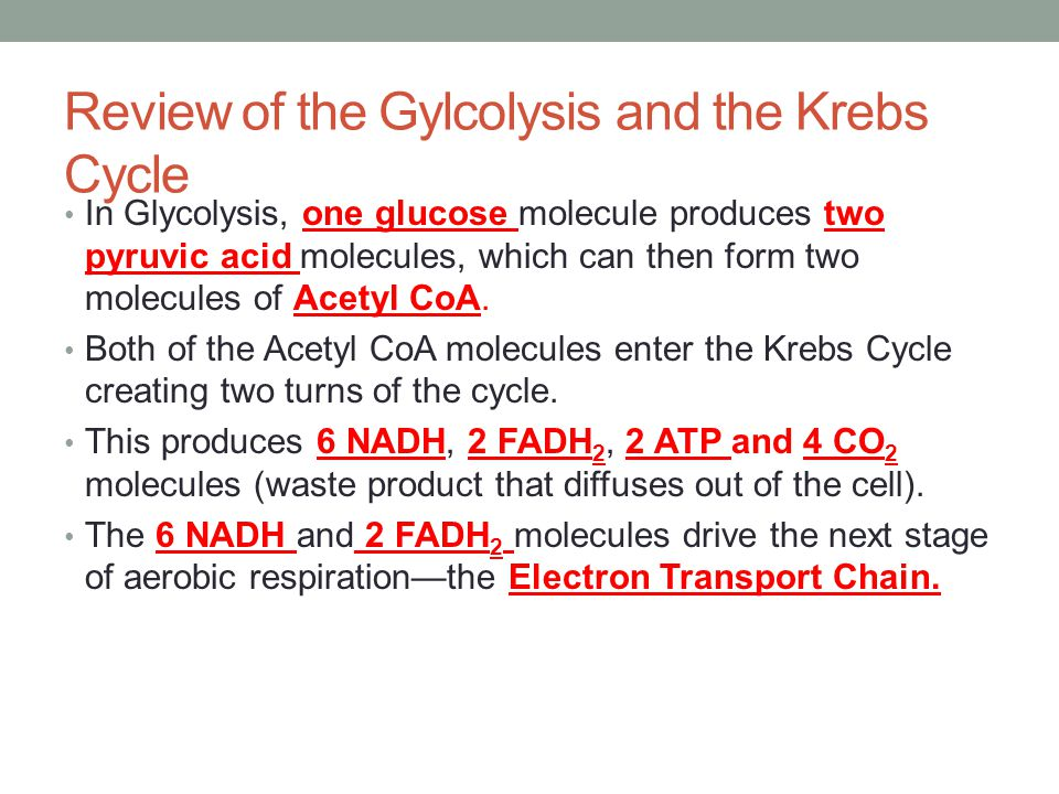 Review of the Gylcolysis and the Krebs Cycle