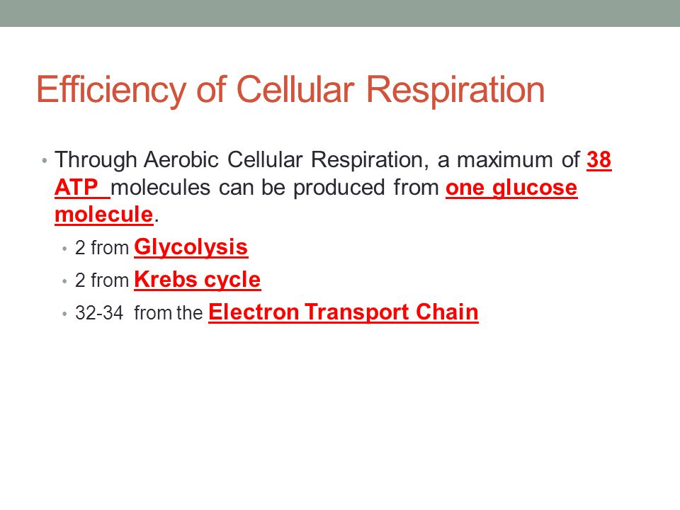 Efficiency of Cellular Respiration