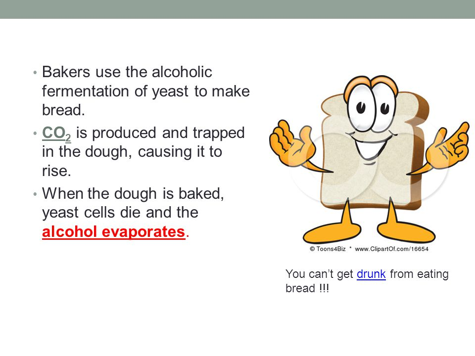 Bakers use the alcoholic fermentation of yeast to make bread.
