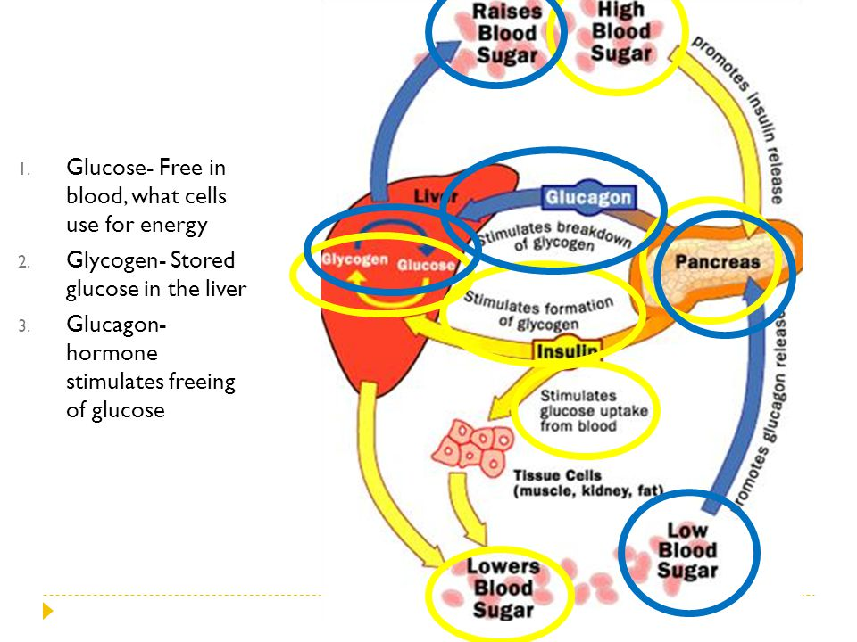 Glucose- Free in blood, what cells use for energy
