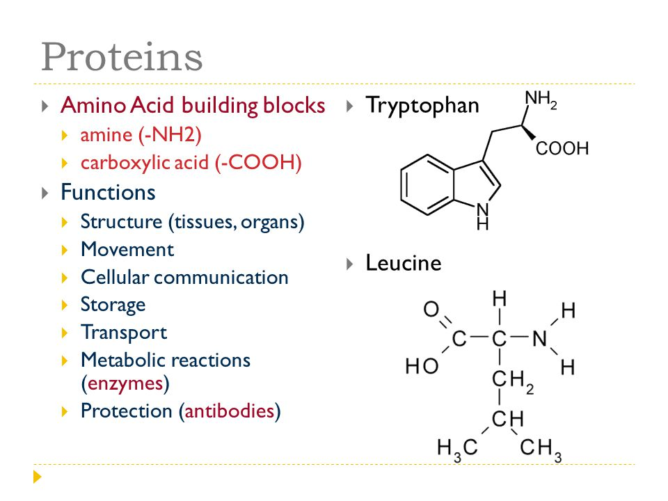 Proteins Amino Acid building blocks Tryptophan Functions Leucine