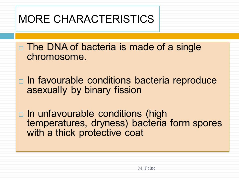 MORE CHARACTERISTICS The DNA of bacteria is made of a single chromosome. In favourable conditions bacteria reproduce asexually by binary fission.