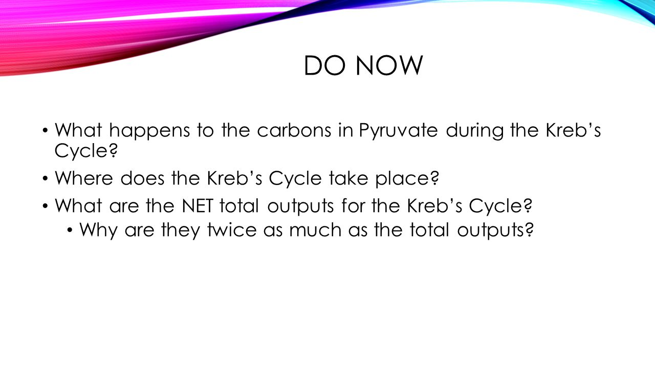 Do Now What happens to the carbons in Pyruvate during the Kreb's Cycle Where does the Kreb's Cycle take place
