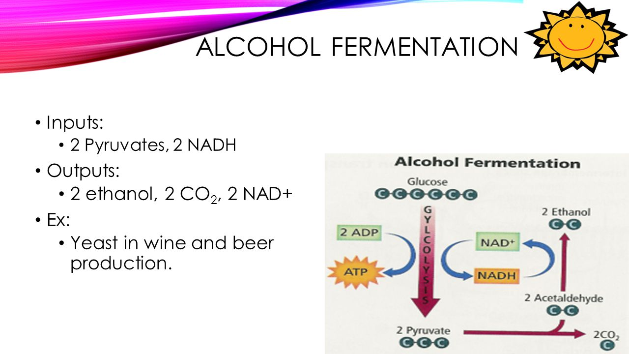 Alcohol Fermentation Inputs: Outputs: 2 ethanol, 2 CO2, 2 NAD+ Ex: