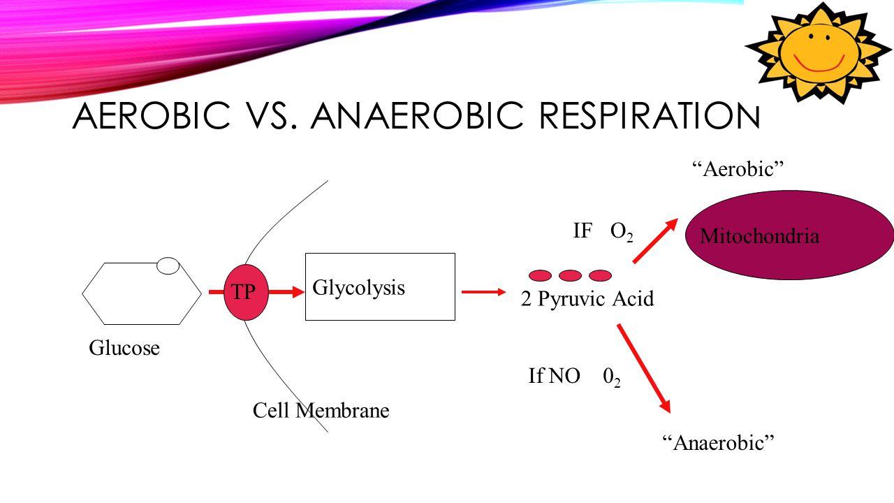 Aerobic vs. Anaerobic Respiration