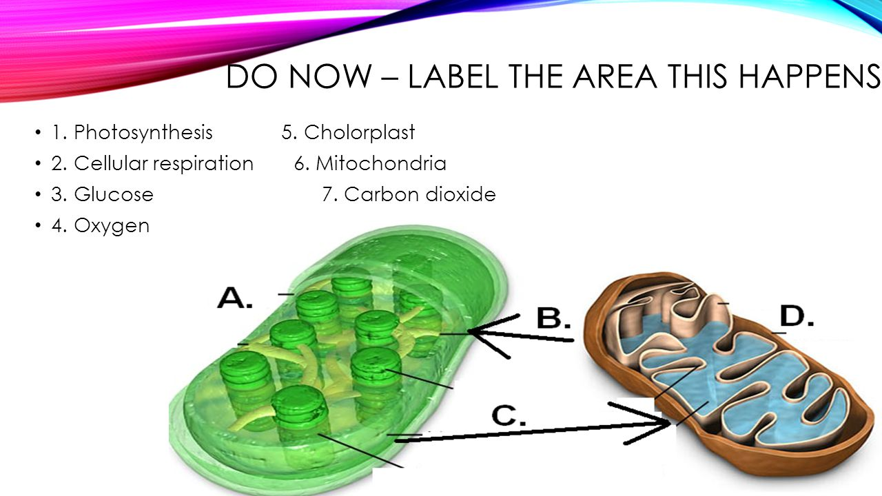 Do Now – Label the area this happens