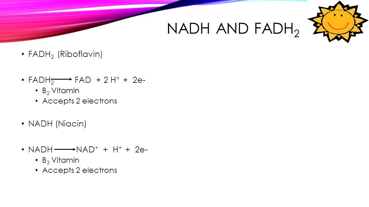 NADH and FADH2 FADH2 (Riboflavin) FADH2 FAD + 2 H+ + 2e- NADH (Niacin)