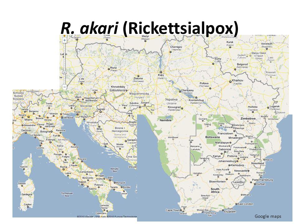 R. akari (Rickettsialpox)