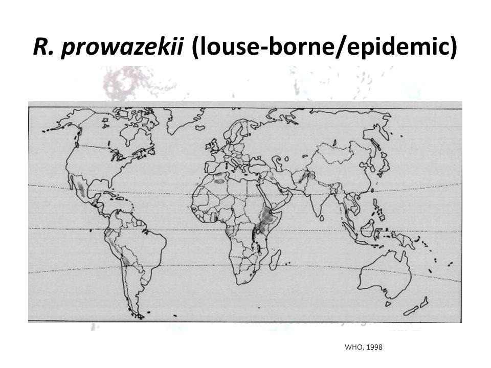 R. prowazekii (louse-borne/epidemic)
