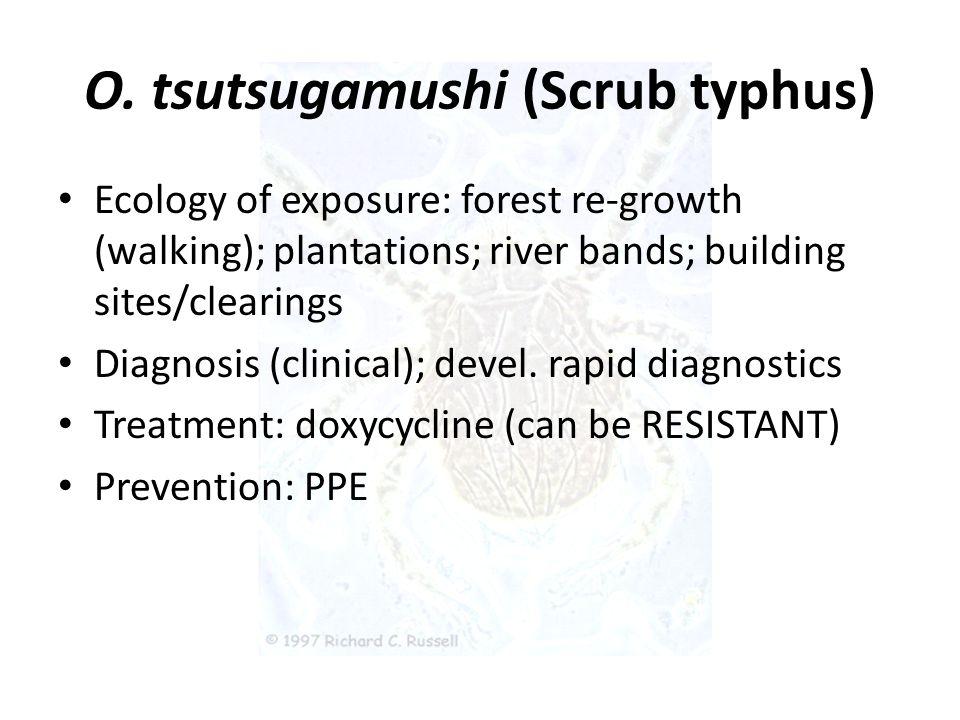 O. tsutsugamushi (Scrub typhus)