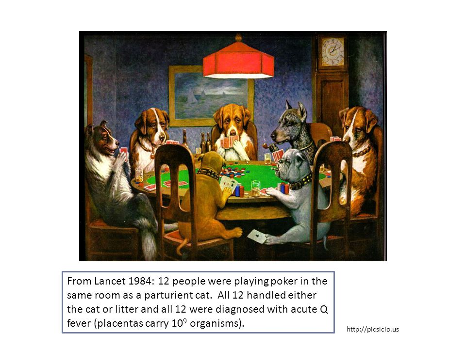 From Lancet 1984: 12 people were playing poker in the same room as a parturient cat. All 12 handled either the cat or litter and all 12 were diagnosed with acute Q fever (placentas carry 109 organisms).