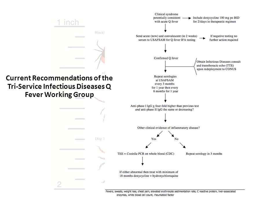 Current Recommendations of the Tri-Service Infectious Diseases Q Fever Working Group