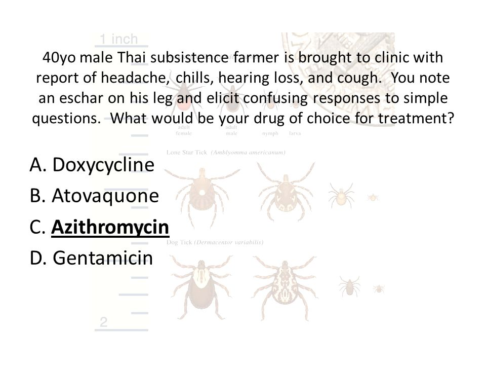 A. Doxycycline B. Atovaquone C. Azithromycin D. Gentamicin