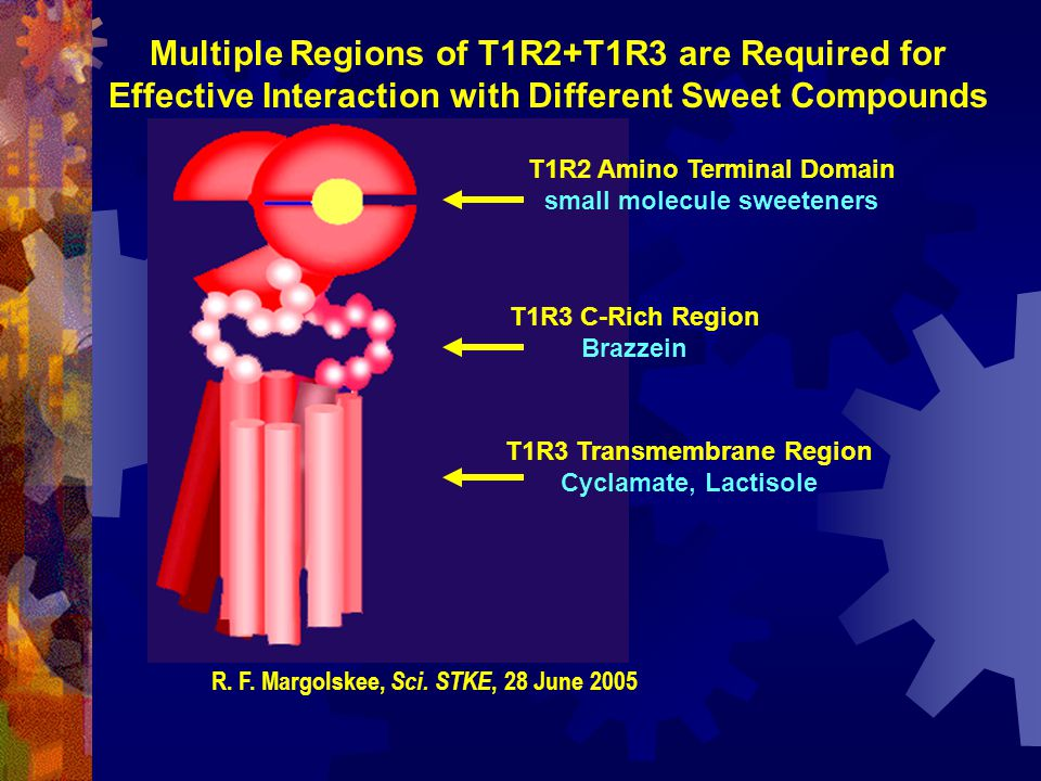 Multiple Regions of T1R2+T1R3 are Required for