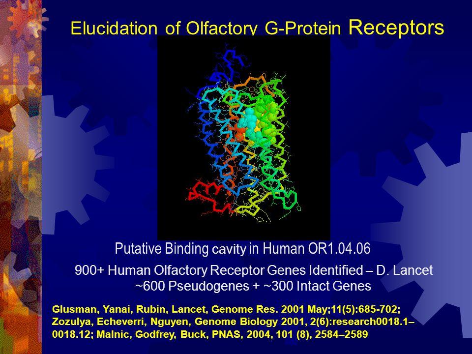 Elucidation of Olfactory G-Protein Receptors