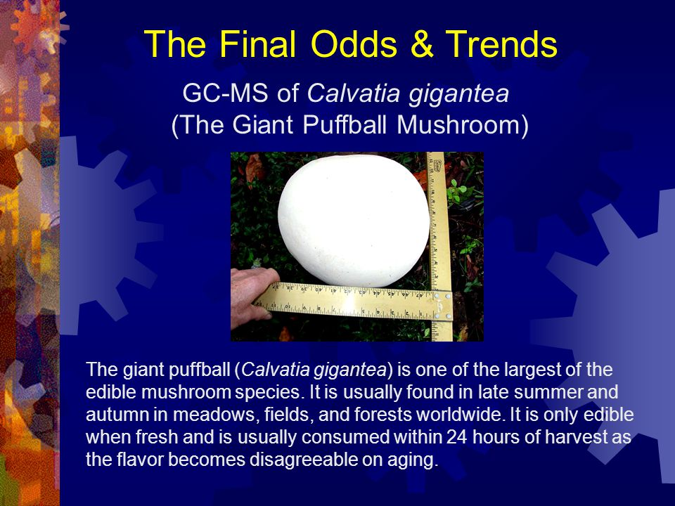 The Final Odds & Trends GC-MS of Calvatia gigantea