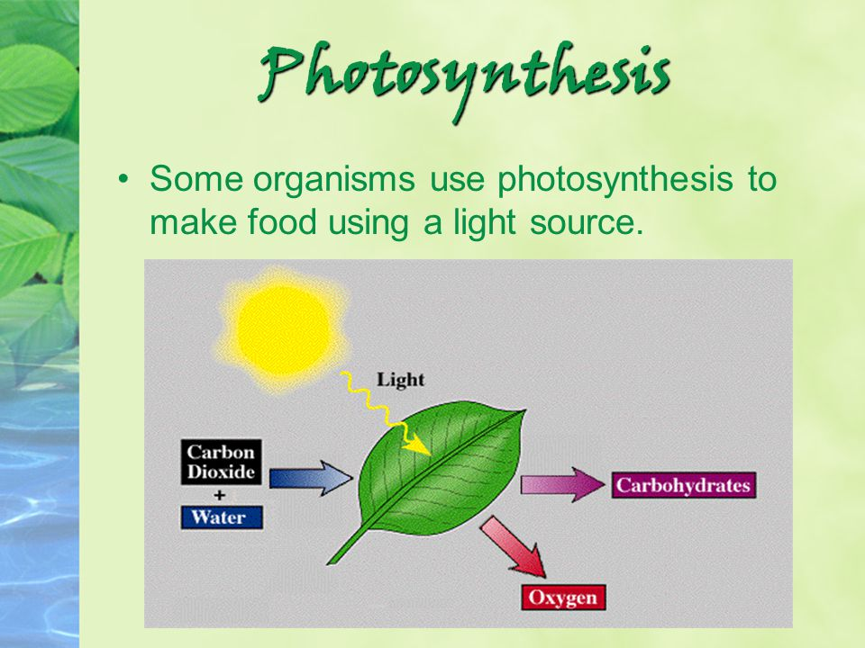 Photosynthesis Some organisms use photosynthesis to make food using a light source.