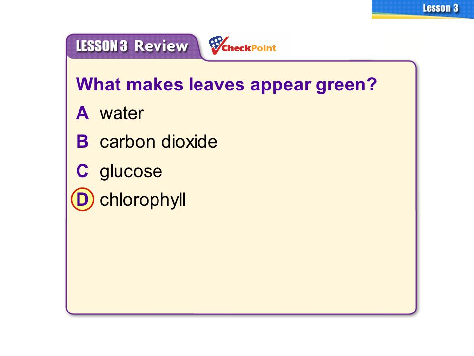 What makes leaves appear green A water B carbon dioxide C glucose