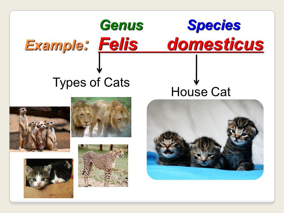 Genus Species Example: Felis domesticus