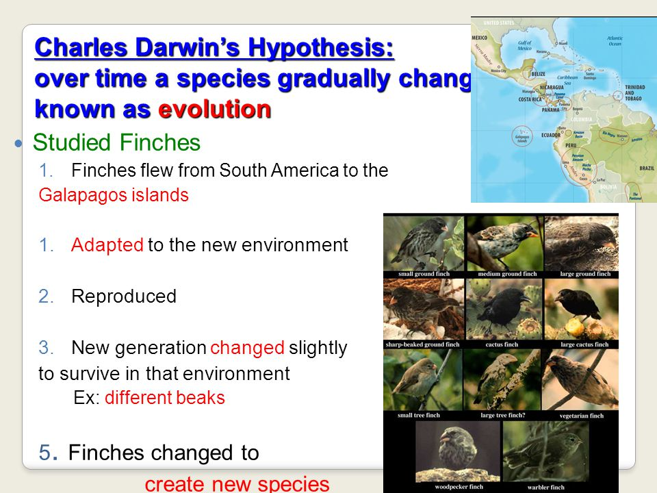 Charles Darwin's Hypothesis: over time a species gradually changes- known as evolution