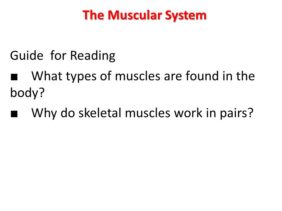 The Muscular System Guide for Reading ■ What types of muscles are found in the body.