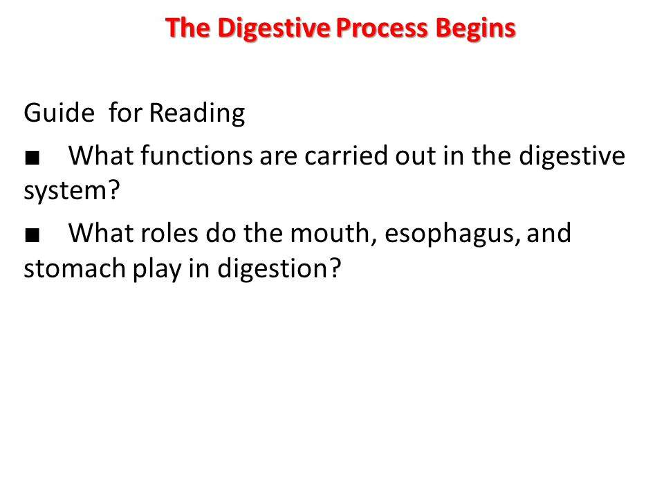 The Digestive Process Begins Guide for Reading ■ What functions are carried out in the digestive system.