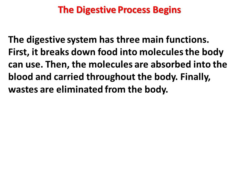 The Digestive Process Begins The digestive system has three main functions.