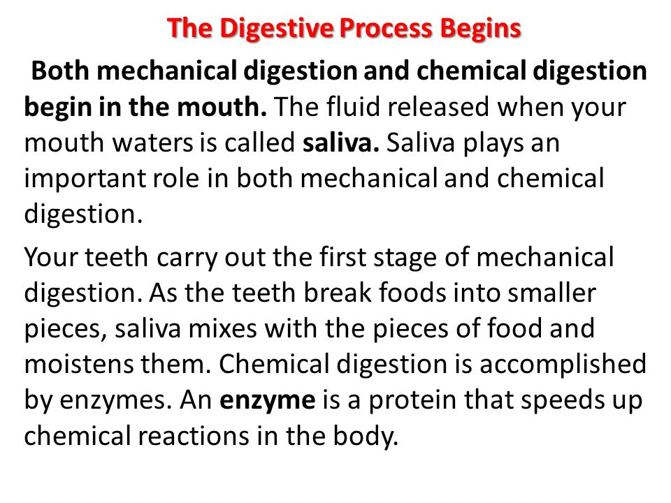 The Digestive Process Begins Both mechanical digestion and chemical digestion begin in the mouth.