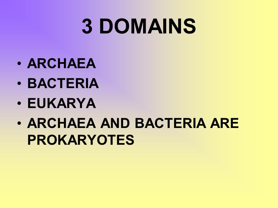 3 DOMAINS ARCHAEA BACTERIA EUKARYA